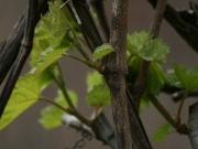 Land-und-Kind.de: Baum im Frühling