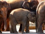 Sieger im Fotowettbewerb 5/2012: Zoo Hannover