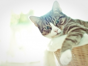 Team Peggy: Unser Kätzchen Mai lässt es sich gutgehen.