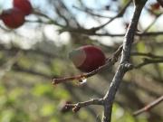 Herbstmotiv: Hagebutten im Sonnenlicht