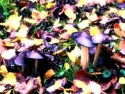 Herbstwiese mit Pilzen