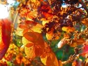 Herbstimmung bei Sonnenaufgang