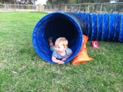 Im Tunnel: Agility is fun .....