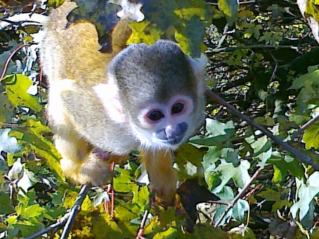 Herr Nilsson guckt euch gern über die Schulter: Im Affen und Vogelpark