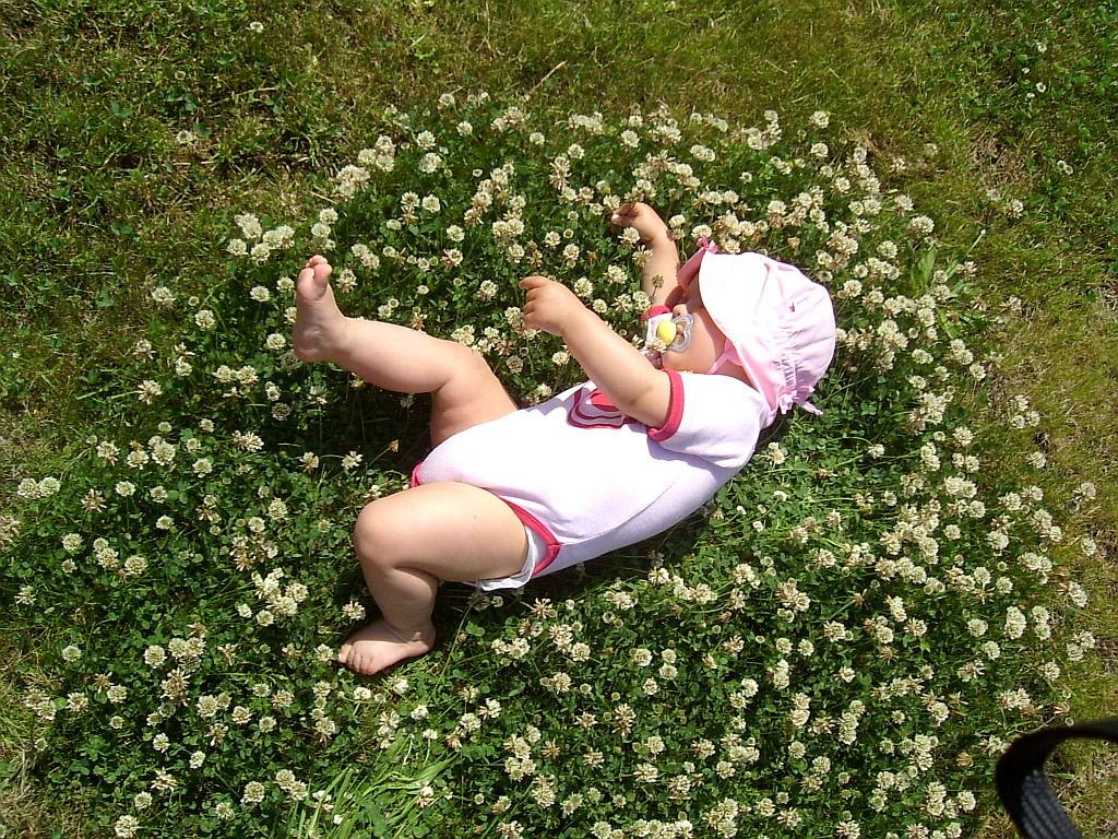 Glücksklee im eigenen Garten?