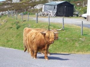 Begegnungen - das sind die Highlander, die man in Schottland kennt