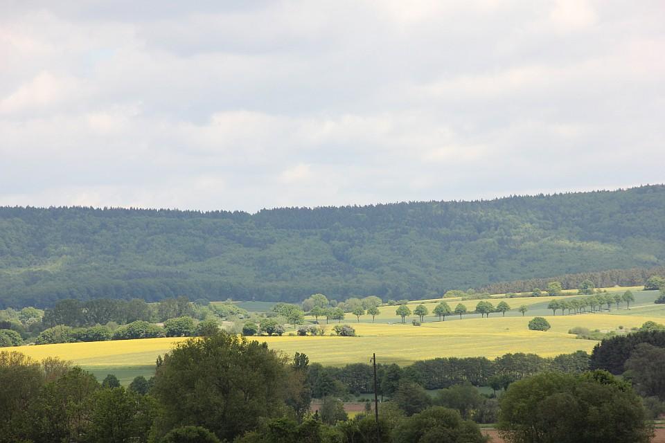 Weserbergland im Mai - Rapsfelder - Landschaft in Grün und Gelb