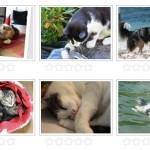 Fotowettbewerb 6: Mein Haustier – Roland vs. Peggy