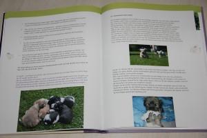 Ein Blick in das Buch von Edgar Aust (Hrsgb.) Der Havaneser - Kleiner Hund ganz groß