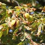 Außer Konkurrenz: unser schönstes eigenes Herbst-Motiv