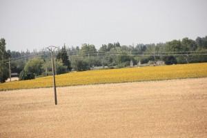 Sonnenblumenfeld mit Überlandleitung (Foto: Land-und-kind.de)